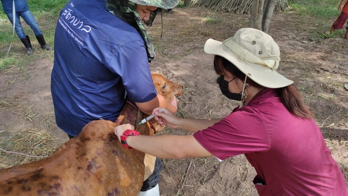 โครงการโคบาลอาสา ลุยสกัดโรคระบาดลัมปีสกิน ในโค-กระบืออีสาน